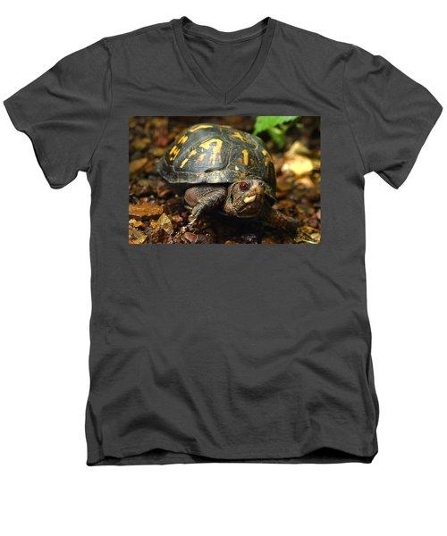 Eastern Box Turtle Men's V-Neck T-Shirt by Michael Eingle