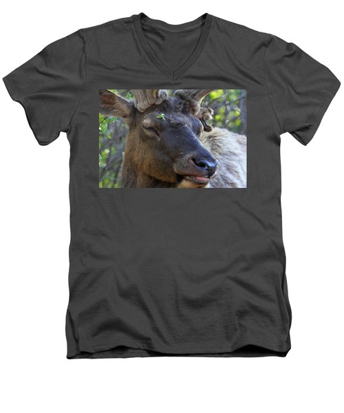 Men's V-Neck T-Shirt featuring the photograph Elk Chuckle by Shane Bechler