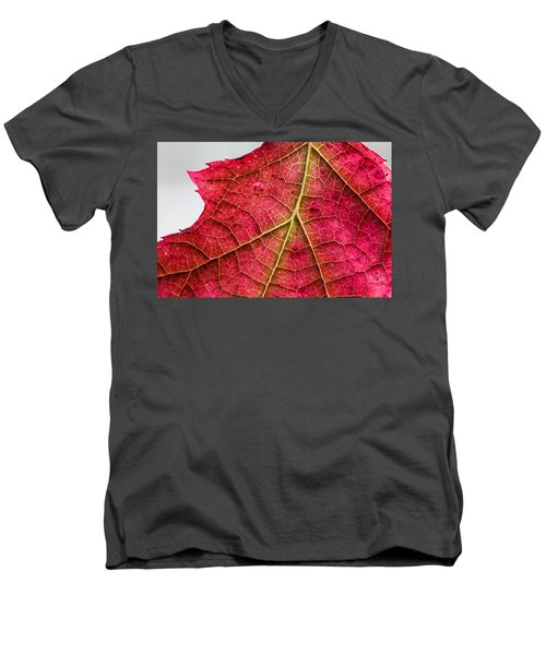 Fall Leaf Men's V-Neck T-Shirt