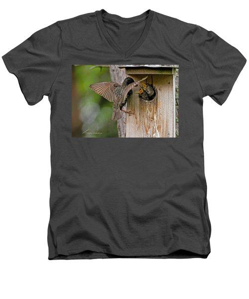 Feeding Starlings Men's V-Neck T-Shirt