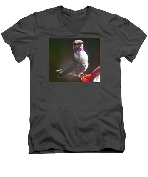 Men's V-Neck T-Shirt featuring the photograph Female Anna On Perch by Jay Milo