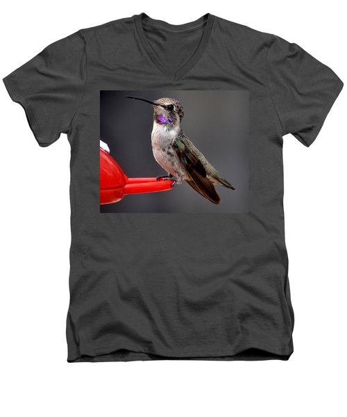 Men's V-Neck T-Shirt featuring the photograph Female Anna's Hummingbird On Perch Posing For Her Supper by Jay Milo