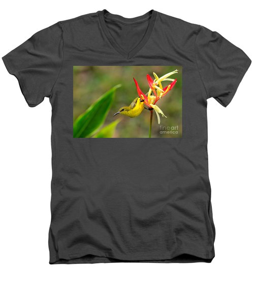 Female Olive Backed Sunbird Clings To Heliconia Plant Flower Singapore Men's V-Neck T-Shirt by Imran Ahmed