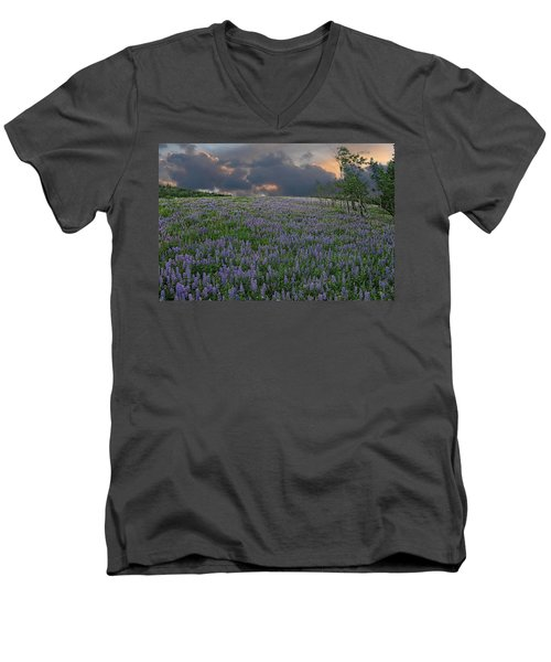 Field Of Lupine Men's V-Neck T-Shirt by Ed Hall
