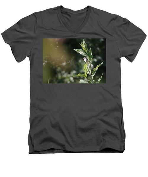 Field Sparrow Men's V-Neck T-Shirt by Melinda Fawver