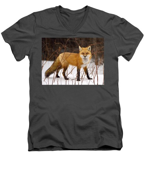 Fox In Winter Men's V-Neck T-Shirt