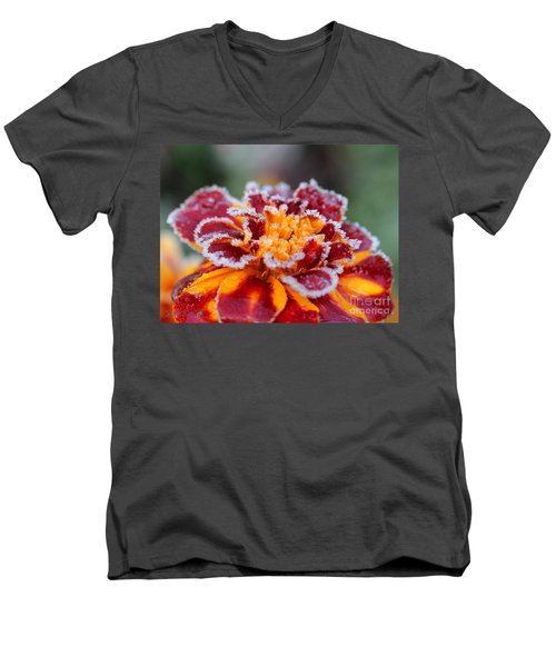 French Marigold Named Durango Red Outlined With Frost Men's V-Neck T-Shirt by J McCombie