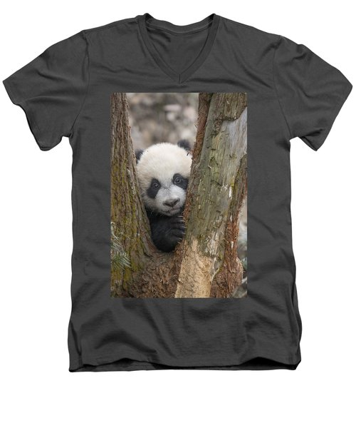 Giant Panda Cub Bifengxia Panda Base Men's V-Neck T-Shirt