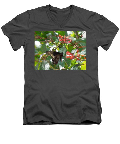 Men's V-Neck T-Shirt featuring the photograph Gold Rim Swallowtail by Ron Davidson
