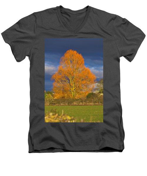 Golden Glow - Sunlit Tree Men's V-Neck T-Shirt