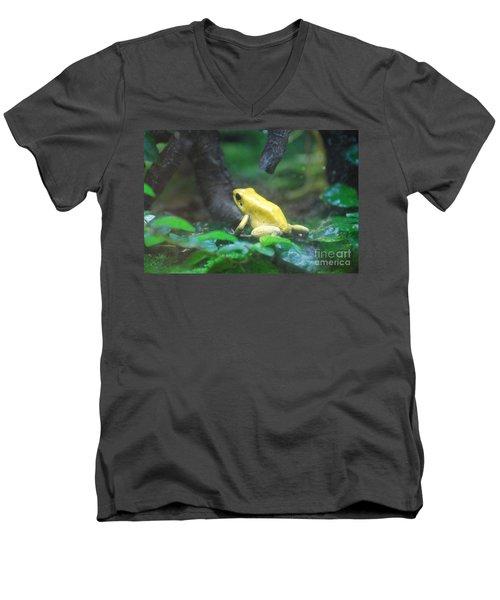 Golden Poison Frog Men's V-Neck T-Shirt by DejaVu Designs