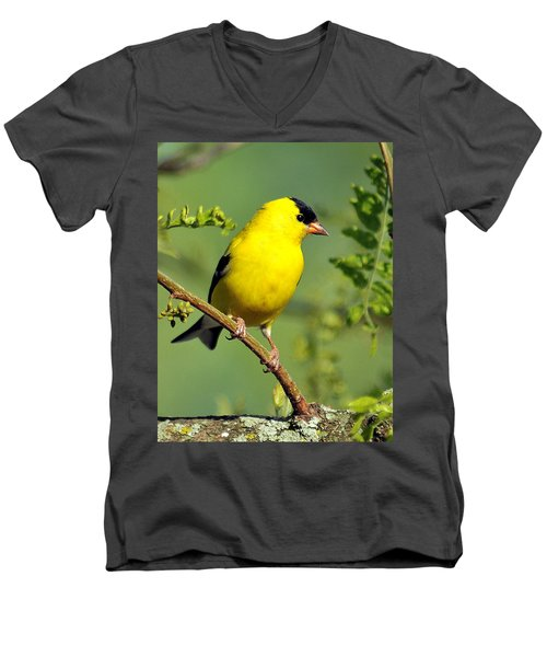 Goldfinch 328 Men's V-Neck T-Shirt