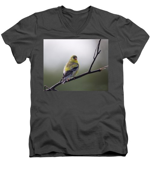 Men's V-Neck T-Shirt featuring the photograph Goldfinch Molting To Breeding Colors by Susan Capuano