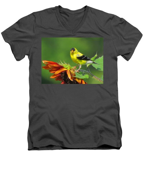 Men's V-Neck T-Shirt featuring the photograph Goldfinch Pose by Dianne Cowen