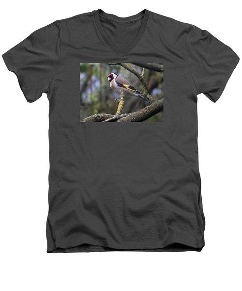 Goldfinch Men's V-Neck T-Shirt by Richard Thomas
