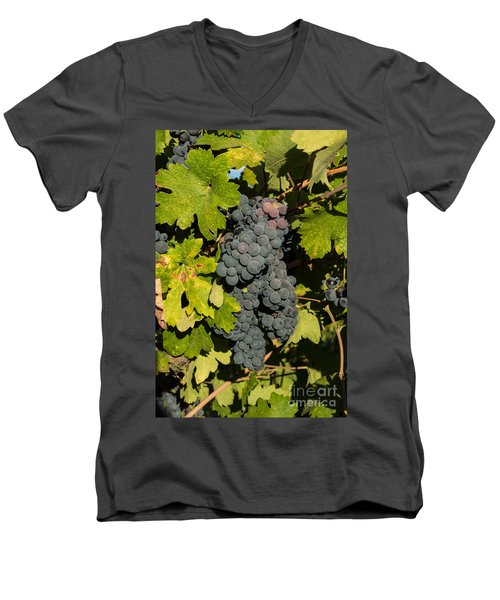 Grape Harvest Men's V-Neck T-Shirt
