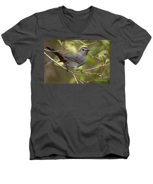 Men's V-Neck T-Shirt featuring the photograph Gray Catbird by Meg Rousher