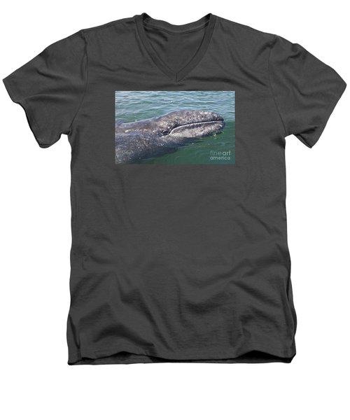 Gray / Grey Whale Eschrichtius Robustus Men's V-Neck T-Shirt by Liz Leyden