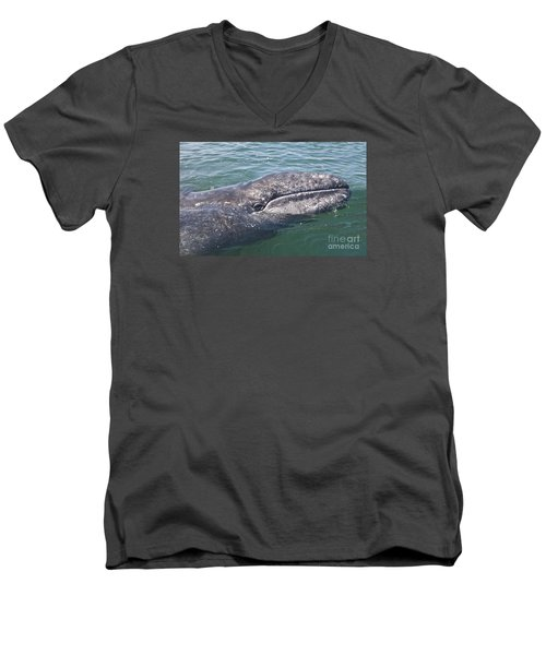 Gray / Grey Whale Eschrichtius Robustus Men's V-Neck T-Shirt