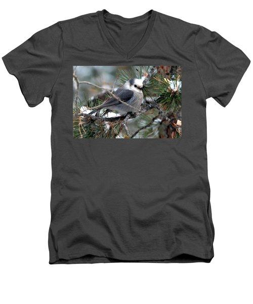 Gray Jay On A Snowy Pine Men's V-Neck T-Shirt