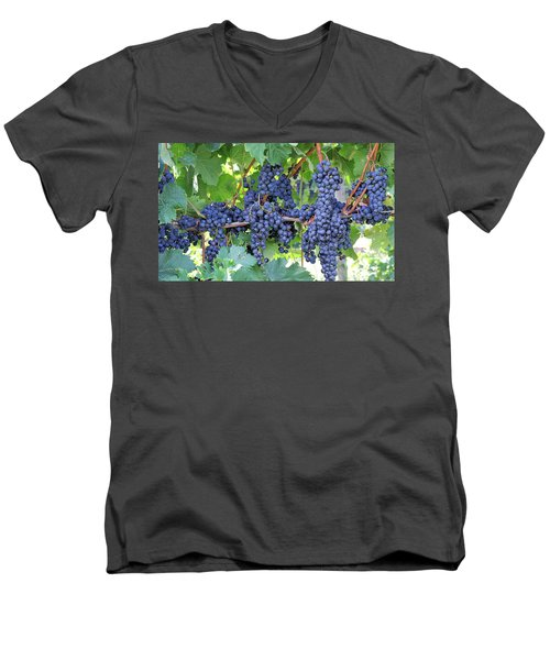 Great Lakes Vineyard Near Lake Erie Men's V-Neck T-Shirt