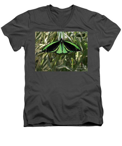 Men's V-Neck T-Shirt featuring the photograph Green Butterfly by Brenda Brown