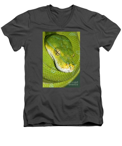 Men's V-Neck T-Shirt featuring the photograph Green Tree Python #2 by Judy Whitton