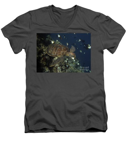 Men's V-Neck T-Shirt featuring the photograph Hawksbill Turtle by Sergey Lukashin