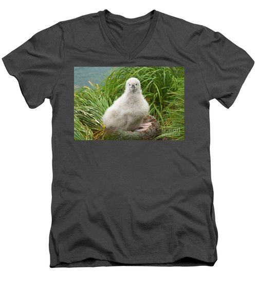 Grey-headed Albatross Chick Men's V-Neck T-Shirt