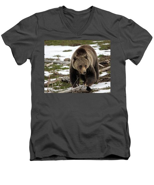 Men's V-Neck T-Shirt featuring the photograph Grizzly Bear In Spring by Jack Bell