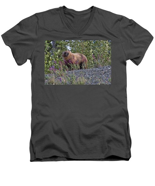 Grizzly Men's V-Neck T-Shirt by David Gleeson