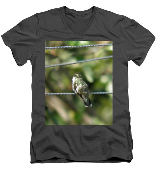 Men's V-Neck T-Shirt featuring the photograph Grooming Hummer by Nick Kirby