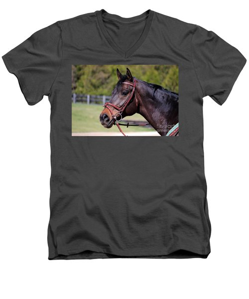 Handsome Gelding Men's V-Neck T-Shirt