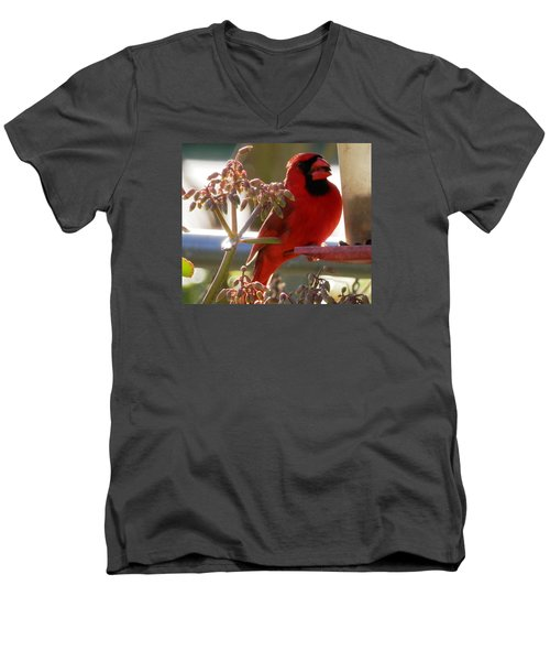 Handsome Red Male Cardinal Visiting Men's V-Neck T-Shirt by Belinda Lee