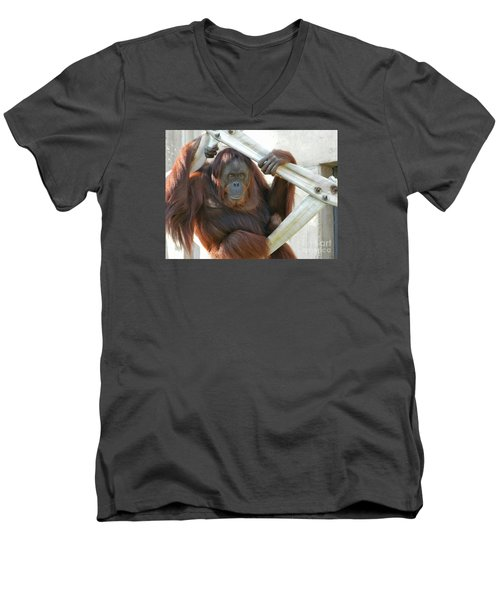 Men's V-Neck T-Shirt featuring the photograph Hanging Out - Melati The Orangutan by Emmy Marie Vickers
