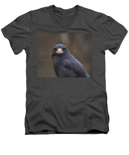 Harris Hawk Men's V-Neck T-Shirt by Chris Flees