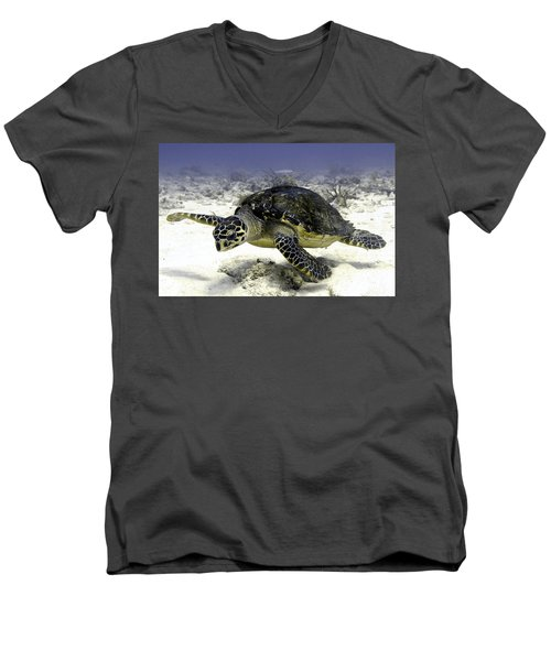 Hawksbill Caribbean Sea Turtle Men's V-Neck T-Shirt