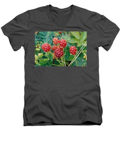 Highbush Blackberry Rubus Allegheniensis Grows Wild In Old Fields And At Roadsides Men's V-Neck T-Shirt