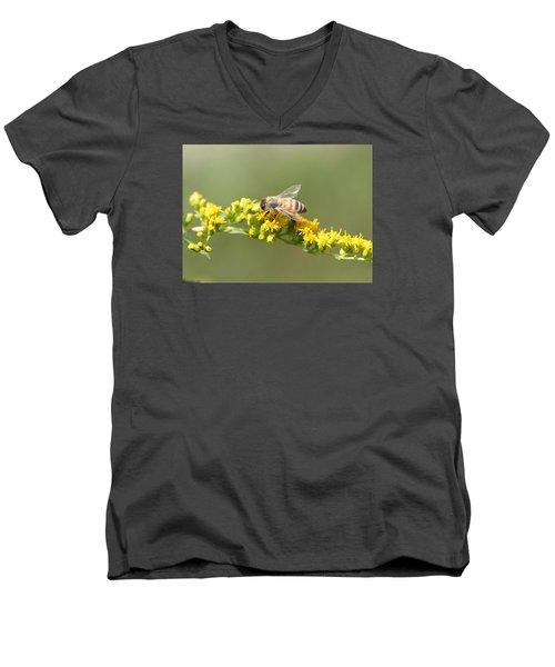 Honeybee On Goldenrod Twig Men's V-Neck T-Shirt by Lucinda VanVleck
