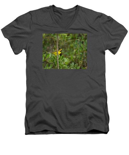 Hooded Warbler Men's V-Neck T-Shirt