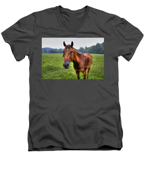 Horse In A Field Men's V-Neck T-Shirt