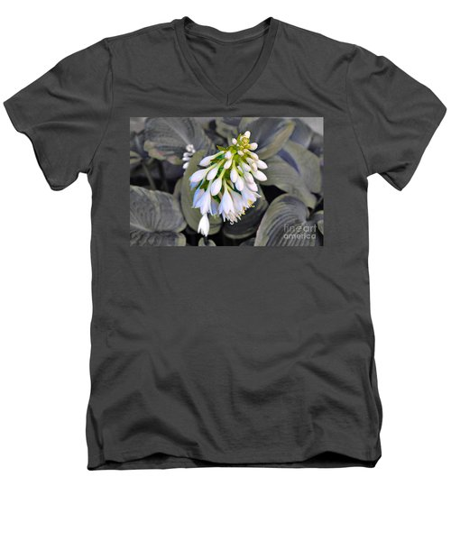 Hosta Ready To Bloom Men's V-Neck T-Shirt