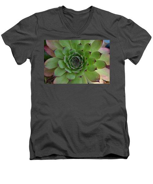 Houseleek Sempervivum Men's V-Neck T-Shirt