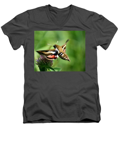 Hummingbird Moth From Behind Men's V-Neck T-Shirt