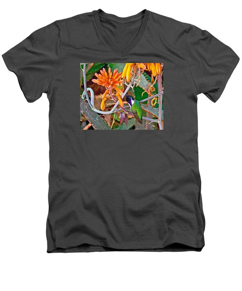 Hummingbird On Aloe In Living Desert In Palm Desert-california Men's V-Neck T-Shirt