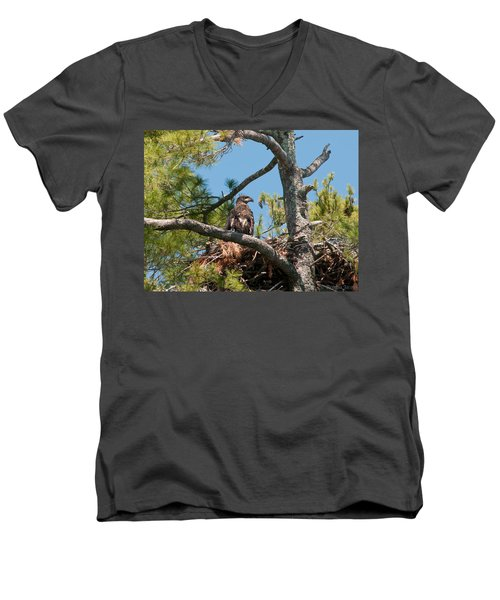 Immature Bald Eagle Men's V-Neck T-Shirt