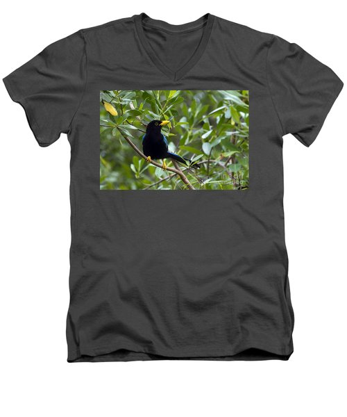 Men's V-Neck T-Shirt featuring the photograph Immature Yucatan Jay by Teresa Zieba