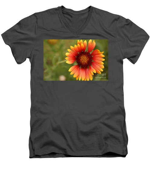 Indian Blanket Flower Men's V-Neck T-Shirt