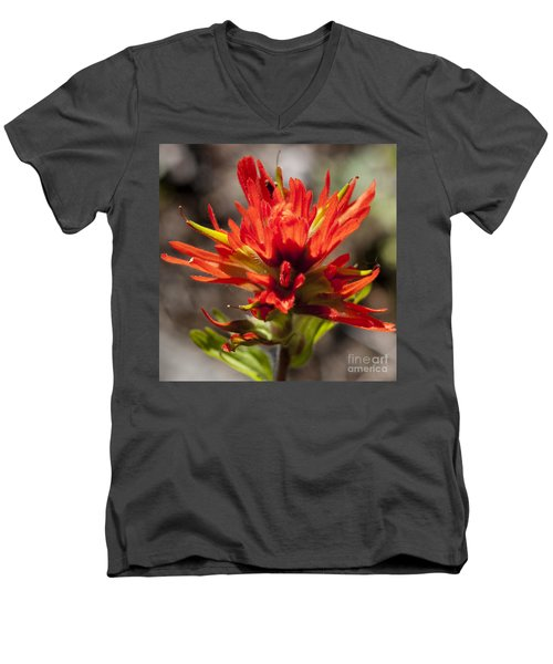 Men's V-Neck T-Shirt featuring the photograph Indian Paintbrush by Belinda Greb