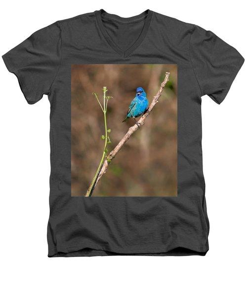Indigo Bunting Portrait Men's V-Neck T-Shirt by Bill Wakeley
